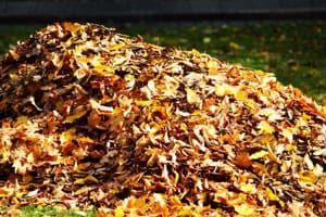 A pile of dead leaves