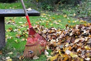 Picture of a rake near a pile of leaves