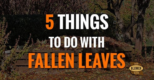 5 things to do with fallen leaves featured image