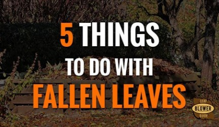 Using Fallen Leaves. 5 Ideas!