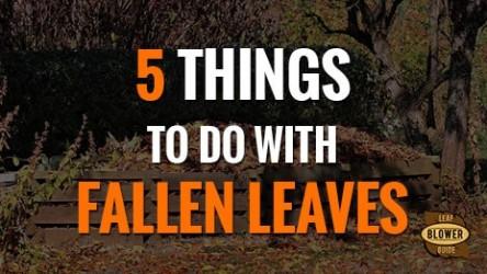 Using Autumn Leaves. 5 Ideas!